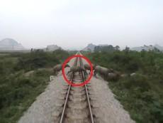 Tàu hỏa đâm chết đàn trâu thả rông băng ngang đường ray