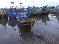 Tàu thuyền đậu kín sông Cà Ty để tránh bão số 9