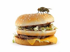 Điều gì xảy ra khi ruồi bám vào thức ăn?