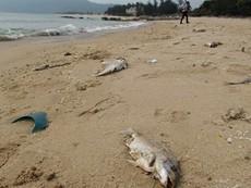 Chiều 30-6 công bố nguyên nhân cá chết bất thường ở miền Trung