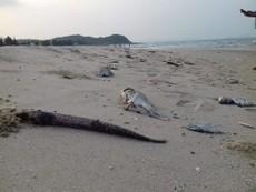Người cung cấp thông tin đường ống thải ngầm Formosa không mất tích
