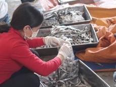 Sở Y tế lấy lại mẫu xét nghiệm vụ cá nục nhiễm phenol