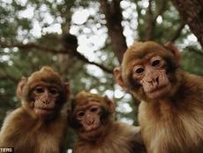 Nữ du khách bị bầy khỉ... lột đồ, tấn công tình dục