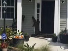 Cá sấu 'bấm chuông' cửa nhà dân