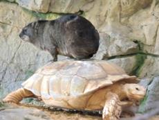 Tình bạn giữa các loài động vật