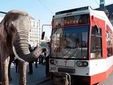 Thụy Điển cấm voi dạo phố