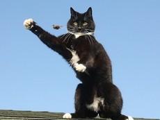 Màn bắt chuột đáng kinh ngạc của con mèo tinh ranh