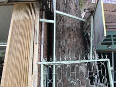 Clip nhà dân 'nuốt chửng' hàng cây dầu cổ thụ ở Sài Gòn