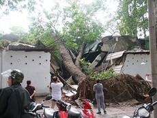 Clip cây cổ thụ đè sập hai phòng của Cung văn hóa Lao Động