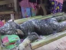 Clip: Quái vật nửa trâu nửa cá sấu ở Thái Lan