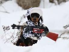 Clip chú chó bồng súng đi săn được cư dân mạng xem nhiều nhất