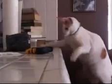 Clip: Những chú mèo phá hoại nhất quả đất