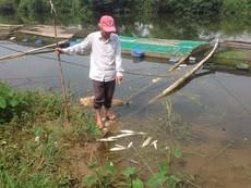 Xác định nguyên nhân cá lồng trên sông Bồ chết