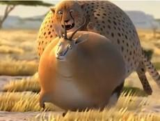 Khi động vật bị béo phì