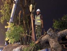 Clip: Cảnh di chuyển những cây cổ thụ trên đường Kim Mã