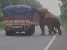 Voi chặn xe tải giữa đường để lấy thức ăn