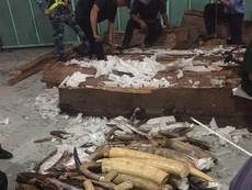 Hơn 600 kg ngà voi giấu tinh vi trong ruột các khối gỗ