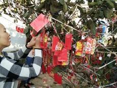 Quảng Ngãi: Ngư dân hái lộc cầu an ngày mùng 1 tết