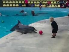 Clip: Cá heo đùa nghịch, chơi bóng cùng bé trai