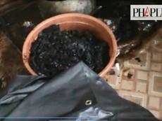 Cận cảnh sản xuất khô bò từ phổi thối