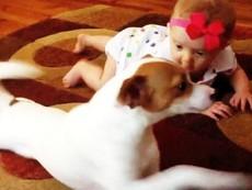 Cún dạy em bé bò siêu dễ thương