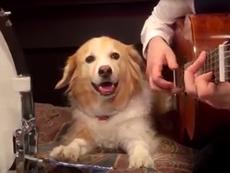 Clip cực độc: Chó cùng chủ chơi nhạc