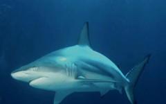 Xác minh thông tin cá mập xuất hiện ở Vịnh Hạ Long