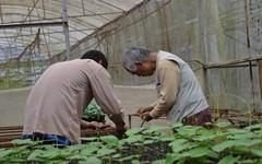 Mang tình yêu nông nghiệp hữu cơ qua đất Việt
