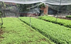 Thoát nghèo nhờ trồng rau sạch