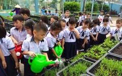 Đã mắt ngắm vườn rau xanh mướt  của HS tiểu học