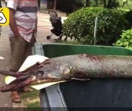 Cho cá ăn ở hồ công cộng, bé 9 tuổi bị cá sấu tấn công