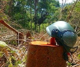 Hơn 5 ha rừng ở đồi Kumagai bị hạ trắng