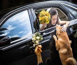 Những bức hình cưới lay động nhất 2014