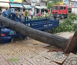 Lốc lớn, cây đổ, tét nhánh, nhà tốc mái hàng loạt ở TP.HCM