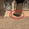Video: Dùng voi giẫm lên HTC Desire Eye