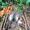 5 người chế tạo súng đi giết voọc dã man trong vườn quốc gia