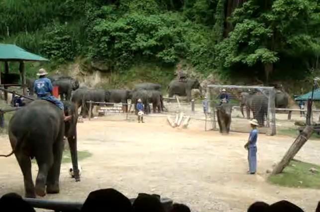 Câu chuyện làm du lịch từ voi