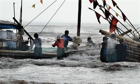 Ngư dân trúng đậm mùa sứa   - ảnh 3