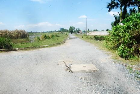 Khu đô thị lớn nhất quận 9 làm nơi chăn bò - ảnh 5