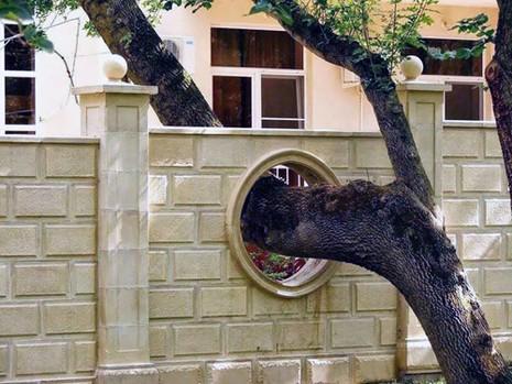 Cấm kị về cây cối trong phong thủy nhà ở - ảnh 1