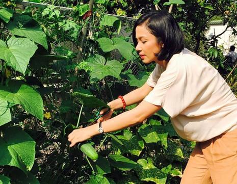 Biệt thự nhà vườn ngập hoa quả của diễn viên Việt Trinh - ảnh 3