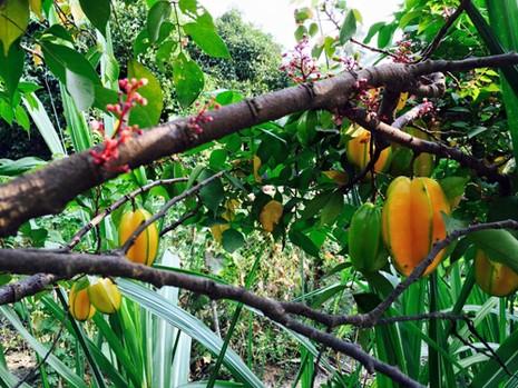 Biệt thự nhà vườn ngập hoa quả của diễn viên Việt Trinh - ảnh 8