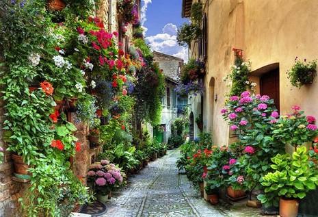 Ngất ngây với những ngôi nhà phủ hoa đầy lối đi - ảnh 11