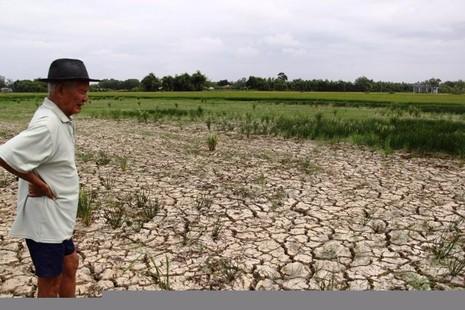đồng ruộng khô hạn nứt nẻ