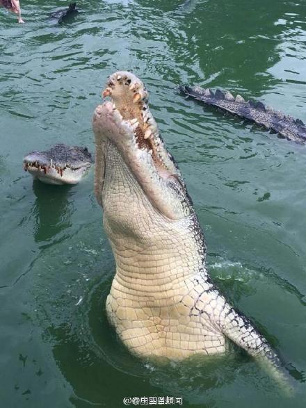 Du khách Trung Quốc điên đảo với dịch vụ câu cá giữa 4.000 con cá sấu - ảnh 6