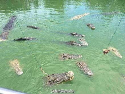 Du khách Trung Quốc điên đảo với dịch vụ câu cá giữa 4.000 con cá sấu - ảnh 8