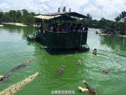 Du khách Trung Quốc điên đảo với dịch vụ câu cá giữa 4.000 con cá sấu - ảnh 9