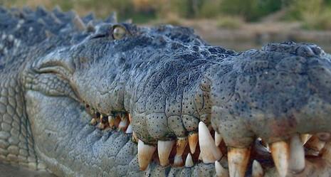Du khách Trung Quốc điên đảo với dịch vụ câu cá giữa 4.000 con cá sấu - ảnh 4