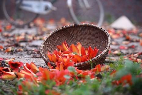 Tháng Ba mùa hoa gạo - ảnh 1