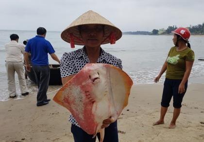 Bộ TN&MT họp báo công bố nguyên nhân cá chết ở miền Trung - ảnh 1